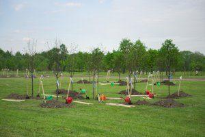 medeliu sodinimas